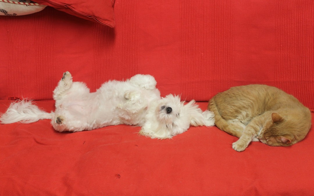 Cat and dog in purrrfect harmony